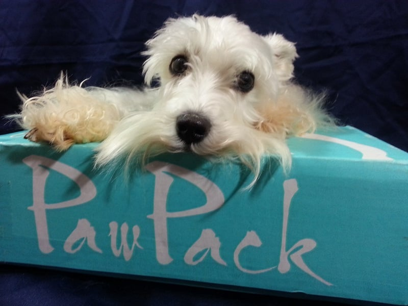 PawPack - Pet Subscription Box