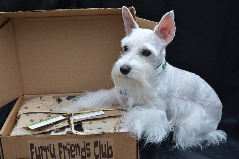 Furry Friends Club Pet Subscription Box - Open