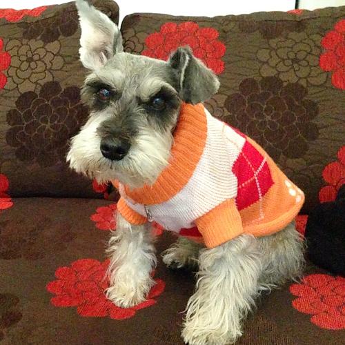 Terry The Mini Schnauzer - Orange White Red Dog Sweater