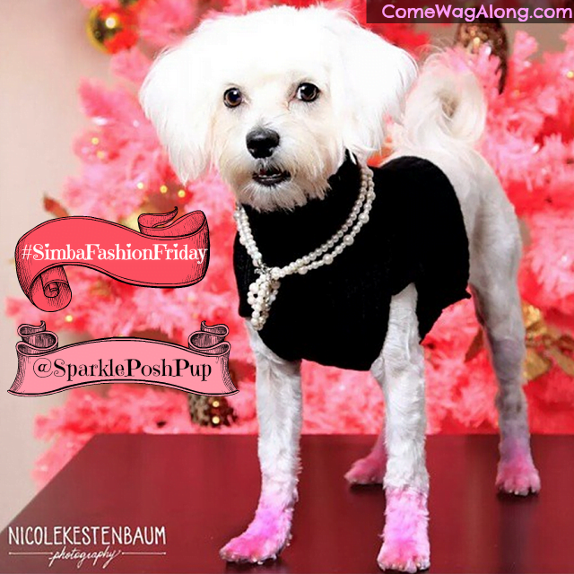 Sparkle the Posh Pup Maltese -  Pink Dog Paws insta