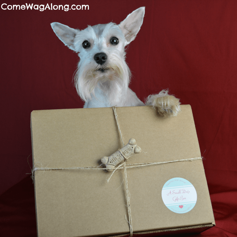 PawPals With Annie Dog Gift Box Review + Coupon Code!
