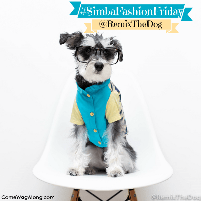 Remix the Dog - Mini Schnauzer - Dog Coat Dog Glasses Insta