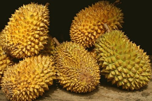 baby size of durian