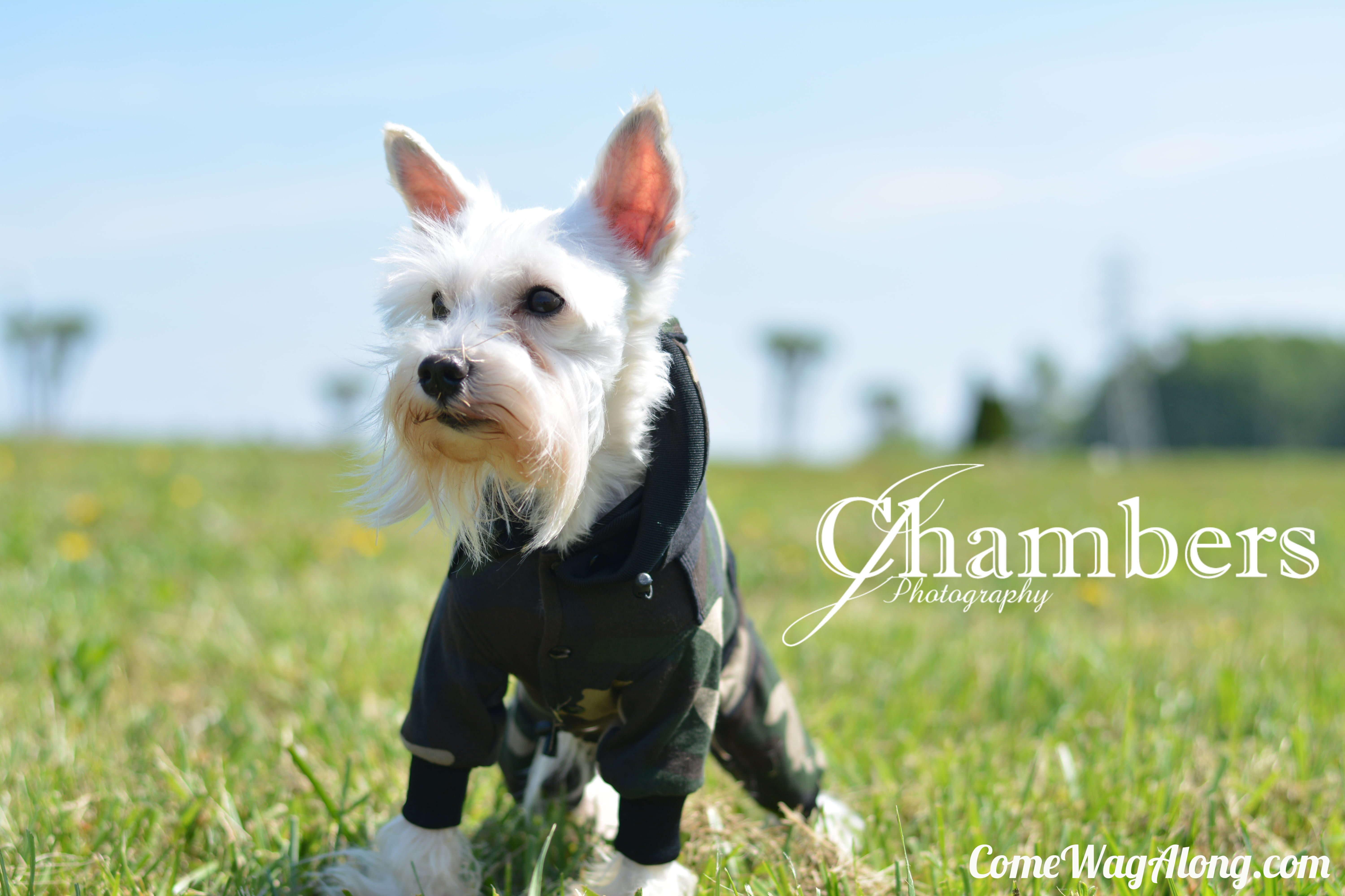 Check out our review of Theo Dog Fashion on ComeWagAlong.com