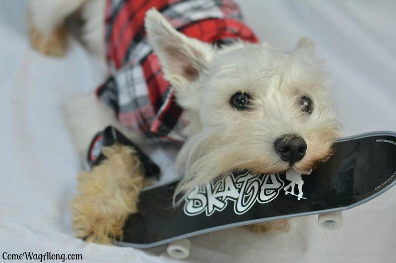Skater Dog - ComeWagAlong.com