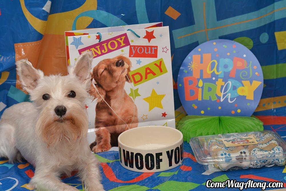 Simbas Birthday