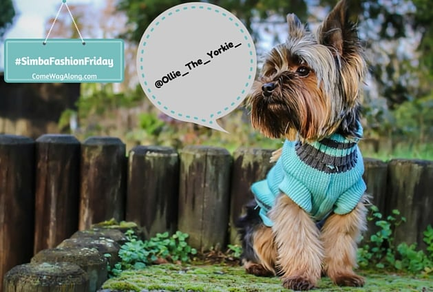 Ollie the Yorkie - dog clothes