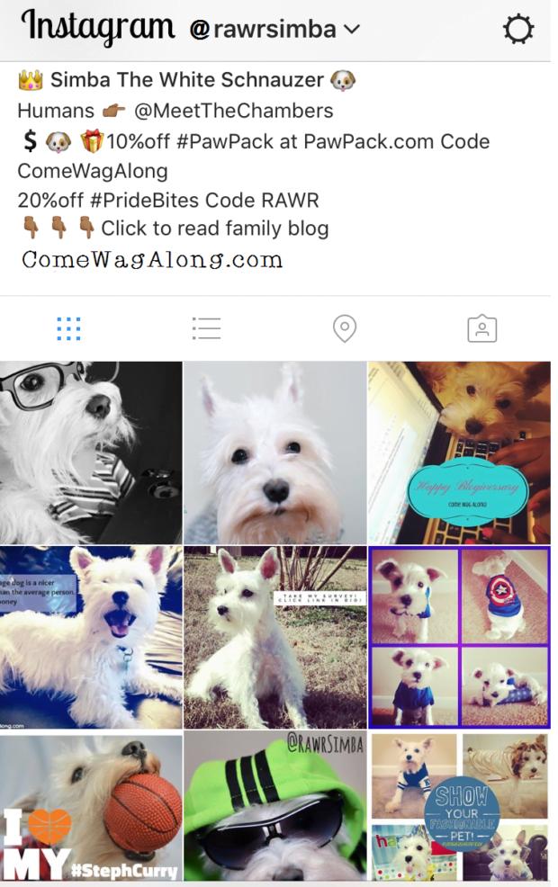 Follow @RawrSimba on Instagram! - ComeWagAlong.com