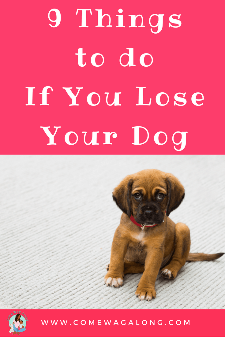 9 Things to do If You Lost Your Dog - ComeWagAlong.com