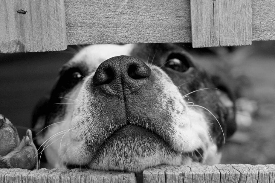 Prevent Lost Pets - ComeWagAlong.com