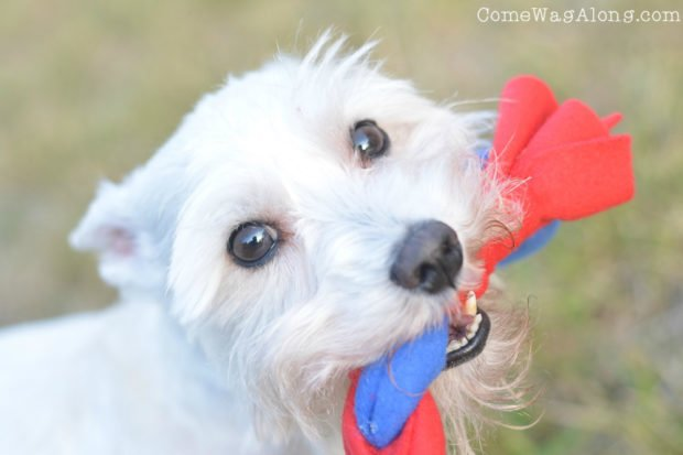 Tug of War Dog Toy - Tether Tug