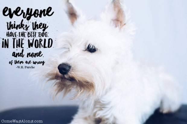 """Everyone thinks they have the best dog in the world and none of them are wrong"" - ComeWagAlong.com"