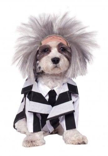 Beetlejuice Dog Halloween Costume