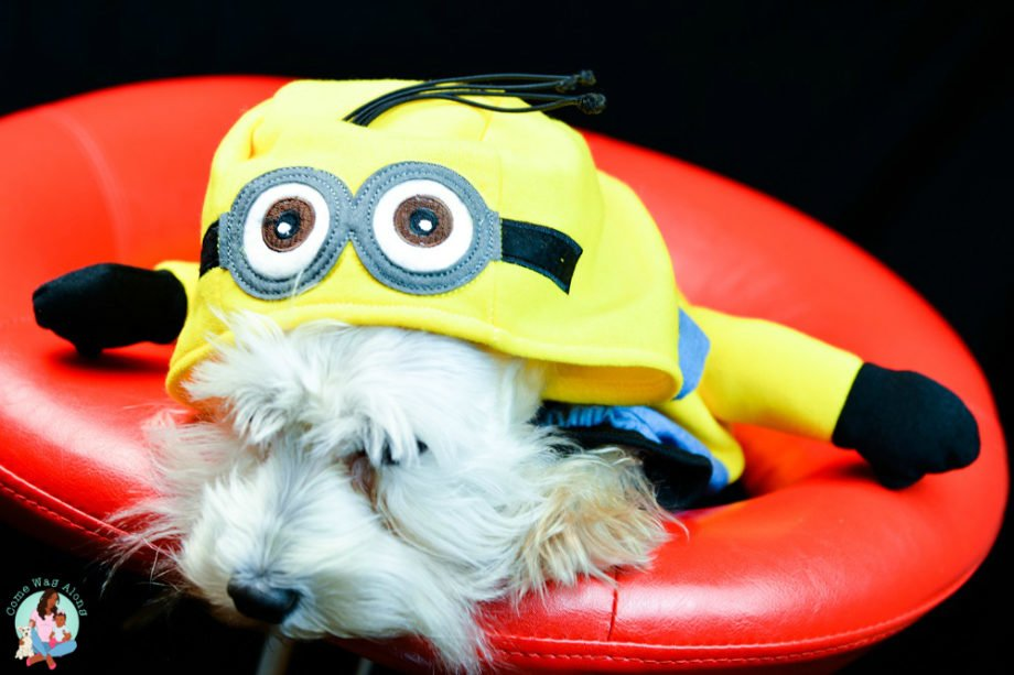 Minion Costume for Pets