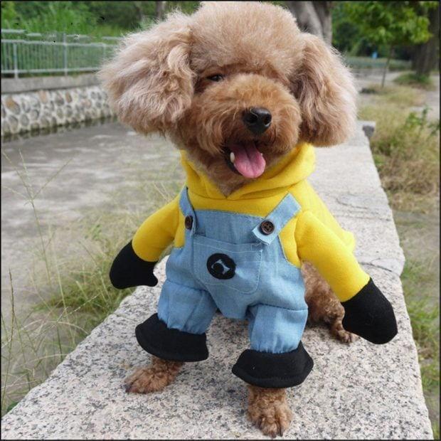 minion dog halloween costume