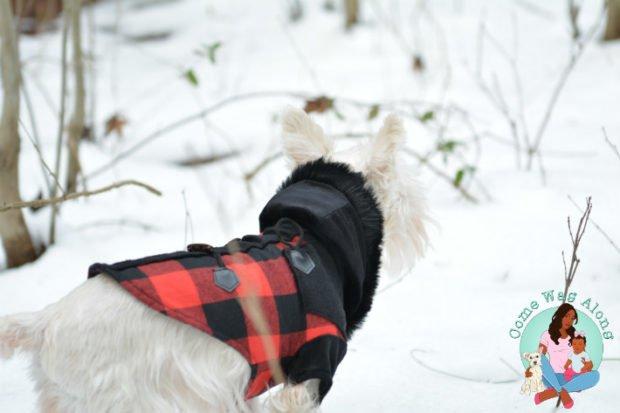 Dog Adventure in Snow