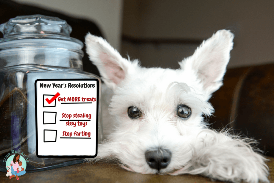 Funny Dog New Year's Resolutions