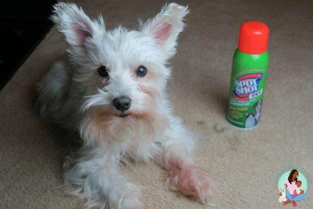 Spot Shot Pet Instant Carpet Stain & Odor Eliminator