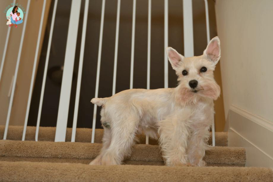 Pet Hacks for Dog Owners - ComeWagAlong.com