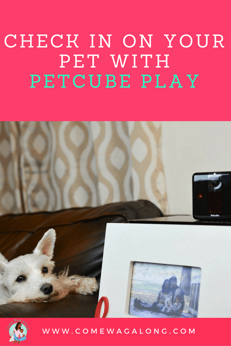 Check in on Your Pet with Petcube Play - ComeWagAlong.com