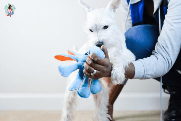 Dog Exercise Routine