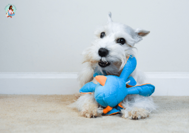 Indoor Dog Activities: Try dog puzzle toys and dog squeaky toys - comewagalong.com