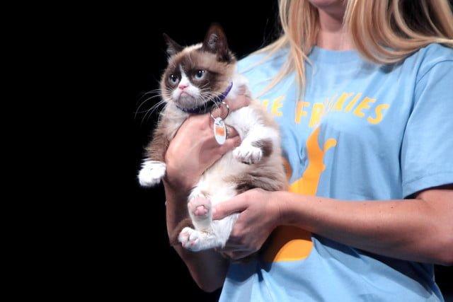 Grumpy Cat Pet Celebrity