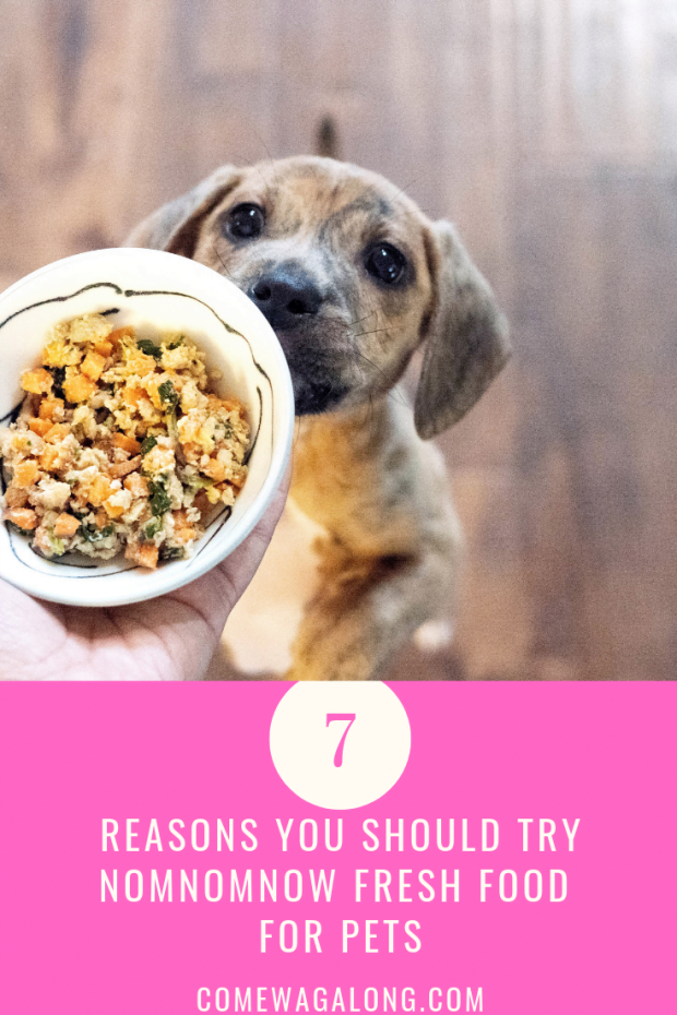 NomNomNow Fresh Dog Food Pin