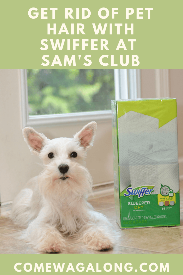 Get rid of pet hair with Swiffer Sweeper Dry Pads at Sam's Club