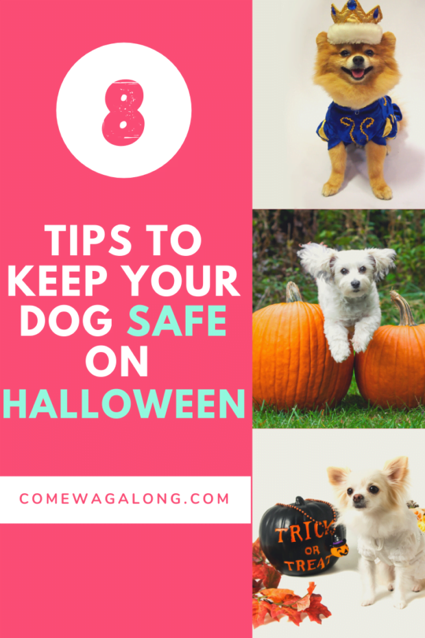8 Halloween Dog Safety Tips - ComeWagAlong.com