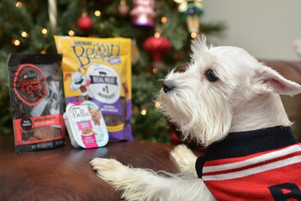 holiday food for dogs