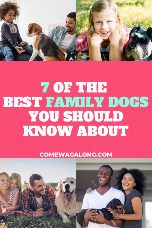 Best Dogs for Kids and Families - ComeWagAlong.com