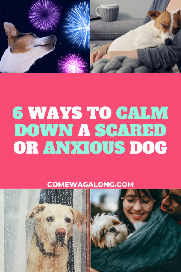 6 Ways to Calm Down a Scared or Anxious Dog - ComeWagAlong.com
