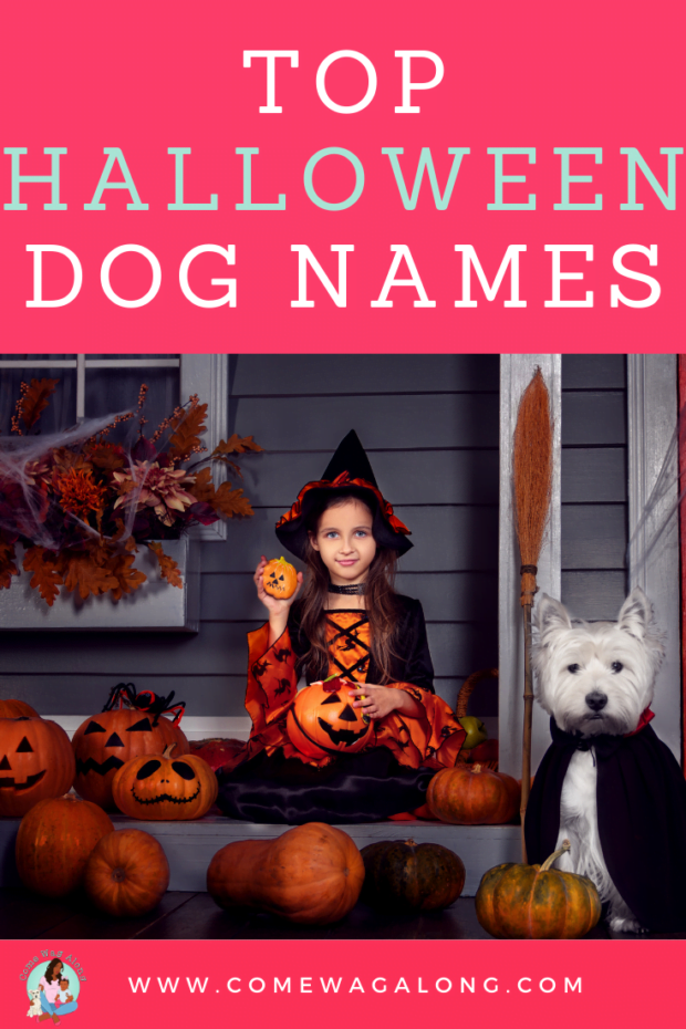 Top Halloween Dog Names - ComeWagAlong.com